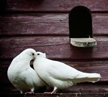 Beautiful doves are given a home in a garden filled with love <3  - pinned by https://www.pinterest.com/sy214/all-creatures-great-small/: Birds Birds, Chubby Birds, Garden Porch And, Forever Doves, Baby