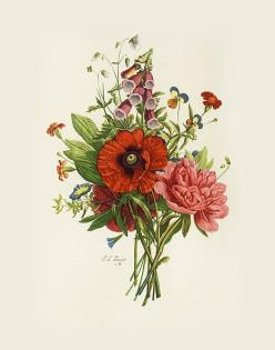 Botanical Etchings after Tessier, Prevost, Van Geert: Tattoo Ideas, Botanical Prints, Vintage, Illustration, Art, Decoupage, Flowers