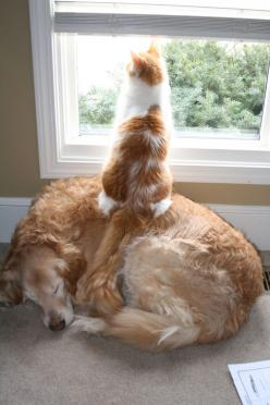 Cat=Now I know why we have a dog: Cats, Funny Animals, Dogs, Friends, Funny Cat, Pets, Funnies, Humor, Things