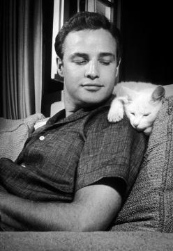 Cat on a hot young Brando.: Cats, Famous People, Marlonbrando, Actor, Marlon Brando, Photo, Kitty, Friend, Animal
