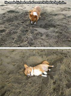 Corgi at the beach  // funny pictures - funny photos - funny images - funny pics - funny quotes - #lol #humor #funnypictures: Corgis, Animals, Dogs, Beds, Stuff, Pet, Funny, The Beach