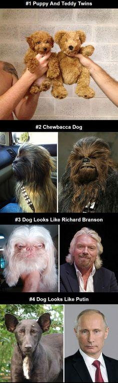 Dogs That Look Like Other Things: Dogs That Look Like Things, Funny Looking Animals, Animal Look Alikes, Dog Look Alikes, Dogs That Look Like Bears, Chewbacca Doggie, Look Alikes Funny, Animals That Look Like People, Dogs That Look Like People