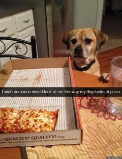 Dump A Day Funny Pictures Of The Day - 84 Pics: Animals, Giggle, Dogs, Pizza, Funny Stuff, Funnies, Humor, Snap Chat