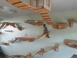 Ever wish you were a cat? You will now.: Cats, Cat Furniture, Ideas, Animals, Stuff, Pets, House, Design, Cat Playground