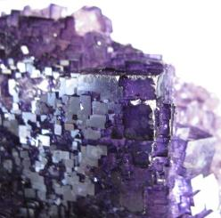 Fluorite from Mexico / Mineral Friends <3: Gems Minerals Crystals, Gems Stones Rocks, Crystals Stones, Gemstones Minerals Flourite, Rocks Minerals Fossils, Stones Rocks Gems, Gems Rocks Minerials, A Gemstones, Rocks Minerals Crystals