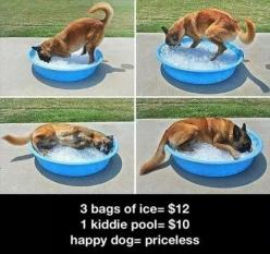 Friday's Funny Pictures – 92 Pics: Doggie, Animals, Idea, Pool, Pets, Puppy, Happy Dogs, German Shepherd