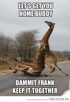 Funny Animal Pictures With Captions: Animals, Dammit Frank, Giggle, Drunk Giraffe, Funny Stuff, Humor, Funnies, Giraffes