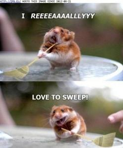 funny animal pictures with captions | funny-animal-captions-animal-capshunz-swept-me-off-my-feet.jpg: Funny Animals, Funny Animal Pictures, Funny Pictures, Hamsters, Funny Stuff, Funnies, Things