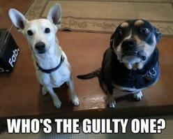 Funny Animal Pictures With Captions more funny pics on facebook: https://www.facebook.com/yourfunnypics101: Funny Animals, Funny Dogs, Pet, Funny Picture, Funny Stuff, Guilty, Funnies, Humor