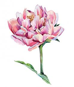 Holly Exley Illustration: Watercolour Flower Illustrations | A Peony and a Dahlia: Watercolor, Flower Art, Flower Watercolour Gouache, Exley Illustration, Watercolour Illustrations, Flower Illustrations, Watercolour Flower, Botanical Art