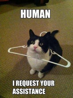 I literally burst out laughing for no reason its just that this is so funny I almost died.: Funny Animals, Funny Cats, Pet, Funny Stuff, Crazy Cat, Funnies, Kitty, Human