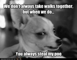I never thought of it this way...: Funny Animals, Dogs, Pet, Funny Stuff, Humor, Funnies, Chihuahua