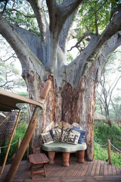 In a perfectly formed nook of a large tree. | 30 Places You'd Rather Be Sitting Right Now: Dream, Tree Houses, Tree Nook, Treehouse, Trees, Places, Garden, Nooks