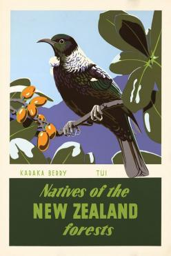 Karaka Berry and Tui. Natives of the New Zealand forests. This poster for the New Zealand Tourist Department shows the tui bird sitting on a branch of karaka berries. Illustrated by Marcus King, c. 1950. Vintage New Zealand travel poster.: Vintage Posters