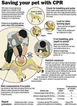 Know doggy CPR. | 25 Brilliant Lifehacks That Every Dog Owner Should Know -that's a good thing to know!: Animals, Dogs, Pets, Fur Babies, Pet Cpr, Petcpr, Dog Cpr