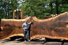 Massive #blackwalnut #hardwood #slab. The tree recovered in July 2014 in Oregon. Currently Air-drying with 6 other slabs from the same tree. See http://www.jewellhardwoods.com for details  #love #table #custom #wood
