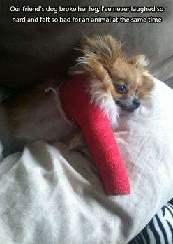Our friend's dog broke her leg…: Leg, Animals, Friends, Dogs, Funny, Dog Broke, Things, Hard, Friend S Dog