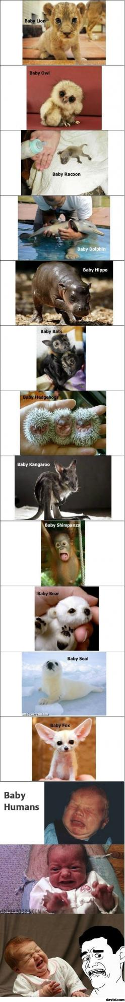 Pretty funny...and sadly true.: Babies, Cute Baby Animals, Baby Human, Baby Owl, Funny, Cute Babies, Baby Bears