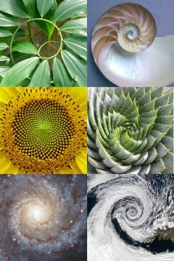 Sacred Geometry, the golden ratio or mean and phi point ratio The same ratio Vitruvius saw in the human body – 1 to PHI (1.618) – exists in every part of nature, from swimming fish to swirling planets. This divine ratio, or divine proportion, has been cal