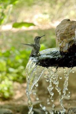 So delicate and beautiful !!: Animals, Humming Birds, Nature, Garden, Hummingbirds