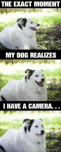 So true.: Animals, Dogs, Dog Realizes, Funny Pictures, Camera, So True, Funnies