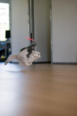 The more you look at it, the funnier it gets.: Cats, Darth Vader, Animals, Star Wars, Funny, Funnies, Things, Starwars