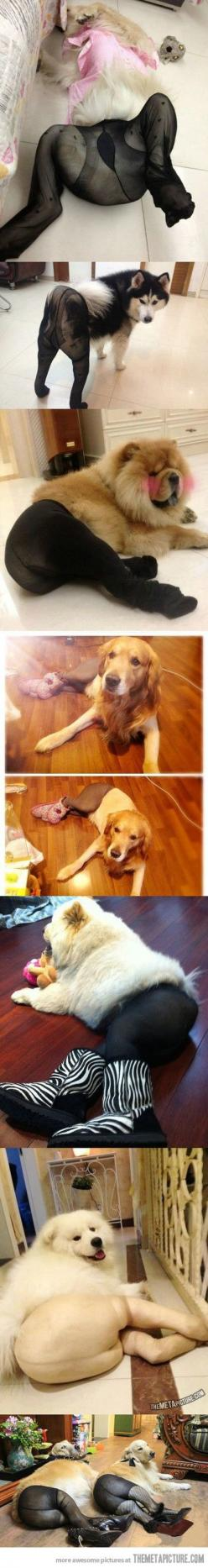This made me laugh so hard!: Giggle, Cant, Thought, Poor Dogs, So Funny, Animal
