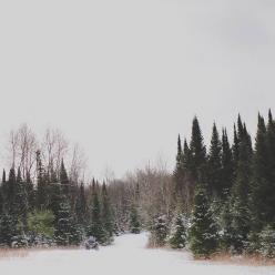 you could do it you know, run away and live in the woods: Favorite Things, Christmas Winter, Mood, Image, Evergreen Winter, Places, Christmas Landscape, Naked Trees, Christmas Trees In The Woods