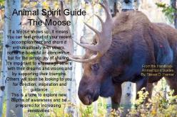 Animal Spirit Guide : The Moose: Spiritguides, Animal Spirit Guides, Moose, Animal Totems, Animal Familiars Guides Totems, Animals Spirit, Native American, Spirit Totem Animals