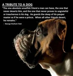 Boxers, I am sooooooooooooo missing my Mika girl. She was perfect and loved me and her best ever buddy my favorite doggie in the world Sammie, who passed to the day one day before. sad: Boxer Dogs, Animals, Quote, Pets, So True, Boxers, Tribute, Boxerdog,