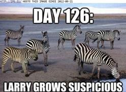 Cute Animals With Captions | Funny Animal Pictures Photos Of Funny And Cute Animals | Personal Blog: Funny Animals, Funny Picture, Funny Stuff, Humor, Funnies, Things, Zebras