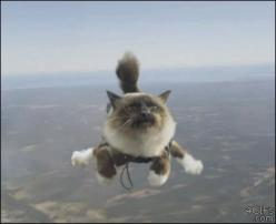 Either you win at skydiving or you look hilarious trying (25 Photos): Cats, Gif S, Cat Gif, Sky Diving, Funny, Skydiving Cat, Gifs, Photo, Animal