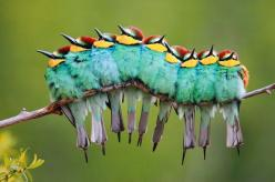 European Bee-eaters: Animals, Animal Pictures, Nature, Amazing Animal, Beautiful Birds, Photo