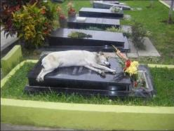 For the past 6 years, a German shepherd called Capitán has slept next to the grave of his owner every night at 6pm. His owner, Miguel Guzmán died in 2006. Capitán, the dog, disappeared while the family attended the funeral services. A week later relatives