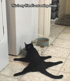 Funny Animal Pictures Of The Day - 27 Pics: Funny Animal Picture, Funny Animals, Cat Eating, Funny Cat Picture, Funny Cats, Eating Dinner, Dog, Black Cat