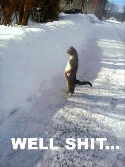 Funny: Funny Animals, Giggle, Well Shit, Funny Animal Pictures, Funny Pictures, Funny Cats, Snow, Funnies