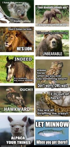 funny-pictures-with-funny-captions-animal-commentary: Funny Animals, Giggle, Animalpuns, Funny Stuff, Funnies, Humor, Animal Puns, Things