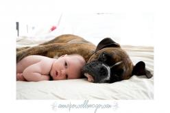 Gracie & Catfish - Only a baby has more cute power than a Boxer!: Boxer Dogs With Kids, Babies And Dogs Photography, Baby Photography With Dog, Baby And Dog Photography, Animals, Boxers Dogs, Boxers And Kids, Boxer Dog Photography, Pets Dogs Kids