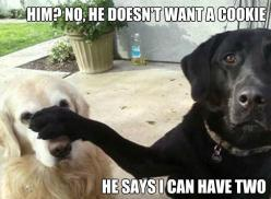 Him? No he doesn't want a cookie. He says I can have two.: Animals, Doesn T, Dogs, Pet, Funny Stuff, Funnies, Funny Animal