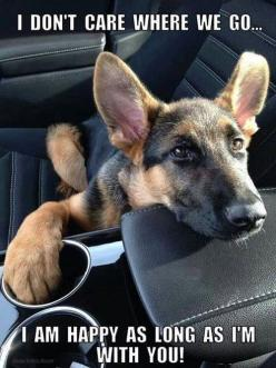I don't care where we go. I'm happy as long as I'm with you.... pet love is true love Neiko!!!: Doggie, Animals, Dogs, Pet, German Shepherds, Puppy, German Shepard, Friend