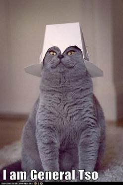 i dont' know why this makes me laugh  ... but it does: Cats, Animals, Stuff, Funny Cat, Funnies, Things, Kitty, Has
