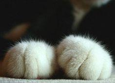 If I had a cat I would so do this :) too cute: Cats, Cat Paws, Animals, Teddybear, Teddy Bears, Funny, Catpaw