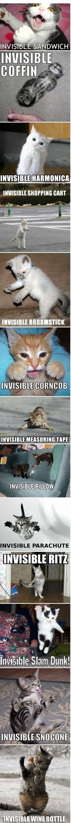 Invisible cat. So cute. Haha!! I thought of Johnny Cat.  :): Cats Humor, Animals, Funny Cats, Funny Stuff, Funnies, Funny Animal, Photo
