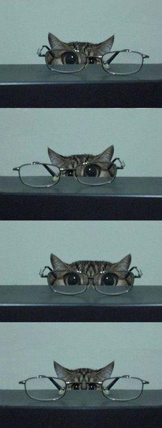 "♥ kitty & glasses, ""I'm training to be a private eye. Let's see, should I use this eye, or this eye, or both eyes?  I think this might be harder than I thought."": Kitten, Animals, Kitty Cat, Cat Eye, Glasses, Stuff, So Cute, Funny Cats"