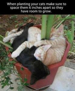 Lol, funny pics, humour quotes, funny jokes, jokes funny, hilarious funny, Lmao funny, hilarious cats …For the best funny quotes and pics visit www.bestfunnyjokes4u.com: Animals, Stuff, Pet, Funny, Kittens, Planting Cats, Garden, Kitty