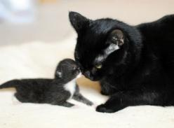 Love Meow - for Ultimate Cat Lovers - Kiss, Cuddle, and Dedication from a Rescue Cat Mama: Kiss, Meow, Mother, Black Cats, Blackcats, Baby, Cats Kittens Kittys