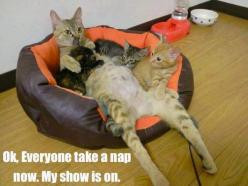 mom: Cats, Animals, Funny Cat, Cat Dad, Funnies, Humor, Funny Animal, Dads