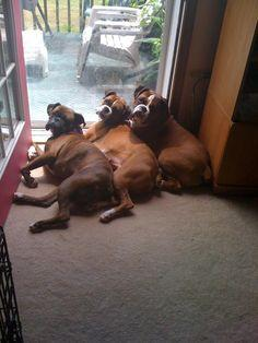 Neither do I! #dogs #pets #Boxers Facebook.com/sodoggonefunny: Animals, Dogs, Stuff, Pet, Boxers, Things