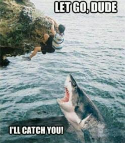 Not okay...satan animals from hell. >> Haha this is the best. <3 #sharks #funny: I Ll Catch, Funny Stuff, Humor, Funnies, Shark Week, Sharks, Animal