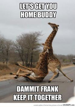 Oh, I don't know why I couldn't stop laughing: Dammit Frank, Giggle, Animals, Drunk Giraffe, Funny Stuff, Funnies, Humor, Giraffes